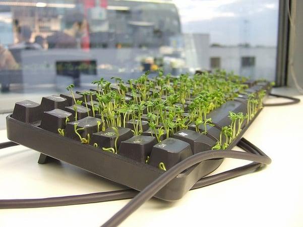 weeds-in-keyboard-prank.jpg-t1474984249835width669nameweeds-in-keyboard-prank.jpg